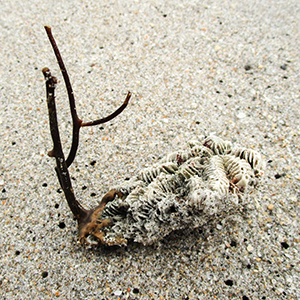 twig balances with coral