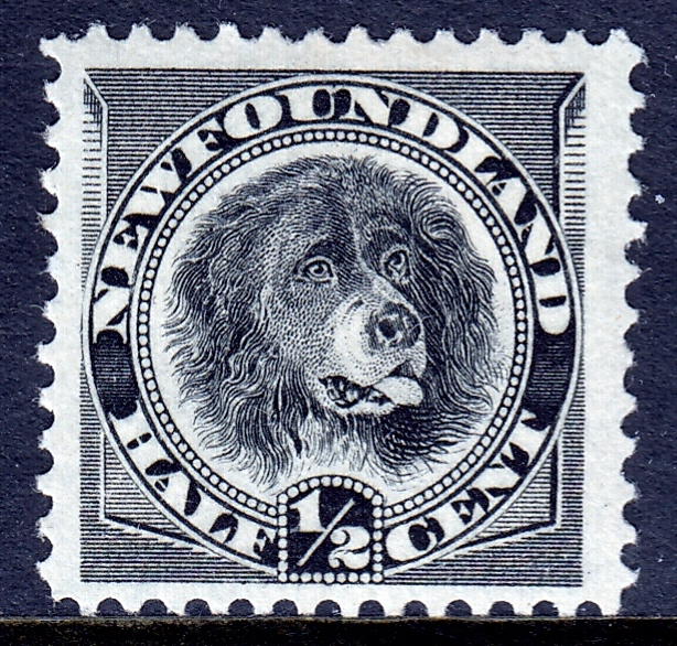 Newfoundland dog stamp